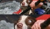 dog animal huge mistake raft water funny pics pictures pic picture image photo images photos lol