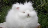 is it humid cat dog rabbit animal fluffy cute funny pics pictures pic picture image photo images photos lol