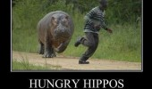 hungry hippos doing it wrong man chasing animal funny pics pictures pic picture image photo images photos lol