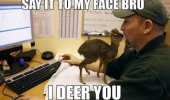 say to my face deer you animal cute baby funny pics pictures pic picture image photo images photos lol