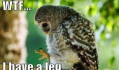 wtf owl leg bird animal funny pics pictures pic picture image photo images photos lol