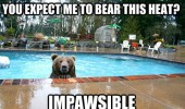 bear swimming pool impawsible animal funny pics pictures pic picture image photo images photos lol