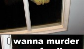 scary insect window butterfly murder family funny pics pictures pic picture image photo images photos lol