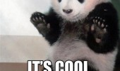 its cool panda animal bamboo funny pics pictures pic picture image photo images photos lol