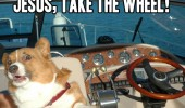 jesus take the wheel dog animal driving boat funny pics pictures pic picture image photo images photos lol