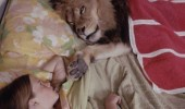 just lion here bed animal funny pics pictures pic picture image photo images photos lol