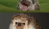 lol serious hedgehog animal cute funny pics pictures pic picture image photo images photos lol