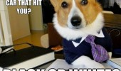 black or white car lawyer dog meme funny pics pictures pic picture image photo images photos lol