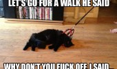 walk they said fuck off cat lolcat animal leash lead funny pics pictures pic picture image photo images photos lol