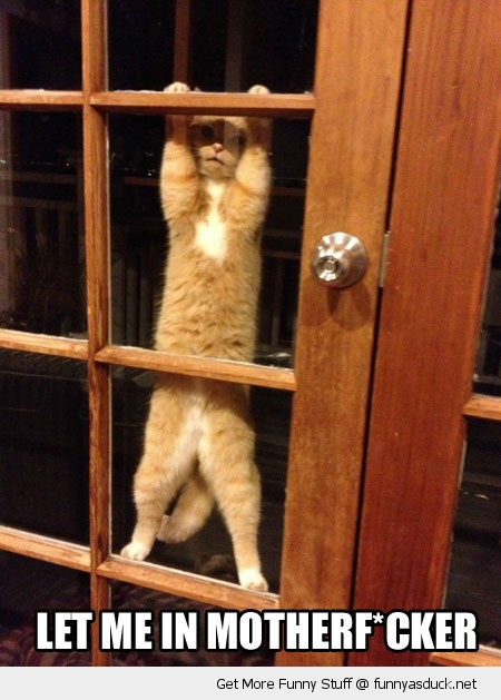 cat window door let me in animal lolcat funny pics pictures pic picture image photo images photos lol