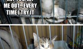let me out cat cage animal lolcat funny pics pictures pic picture image photo images photos lol