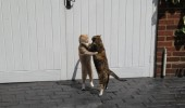 lets tango cats dance dancing animals funny pics pictures pic picture image photo images photos lol