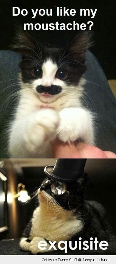 cat lolcat mustache like a sir animal funny pics pictures pic picture image photo images photos lol