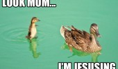 look mom jesusing duck water animal walk funny pics pictures pic picture image photo images photos lol
