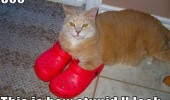 cat crocs shoes stupid lolcat animal funny pics pictures pic picture image photo images photos lol
