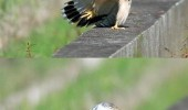haters gonna hate eagle bird animal funny pics pictures pic picture image photo images photos lol
