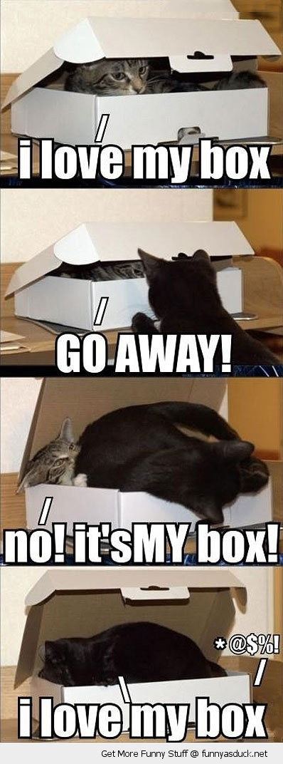 cat lolcat animal sleeping box love funny pics pictures pic picture image photo images photos lol