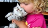 cat animal love you tiny human cuddle cute funny pics pictures pic picture image photo images photos lol
