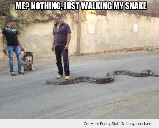 man walking snake huge animal anaconda funny pics pictures pic picture image photo images photos lol