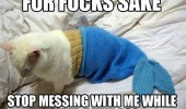 fuck sake cat lolcat animal mermaid costume sleep funny pics pictures pic picture image photo images photos lol
