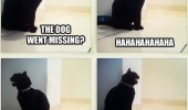 dogs missing cat laughing lolcat animal funny pics pictures pic picture image photo images photos lol