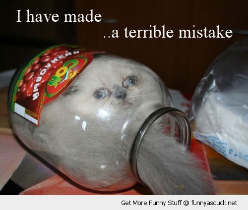 cat in jar animal lolcat stuck terrible mistake funny pics pictures pic picture image photo images photos lol