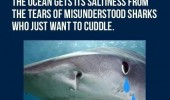 misunderstood shark tears ocean animal funny pics pictures pic picture image photo images photos lol