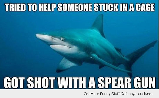 misunderstood shark fish ocean stuck cage spear funny pics pictures pic picture image photo images photos lol