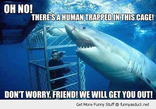 misunderstood shark fish ocean human cage animal funny pics pictures pic picture image photo images photos lol