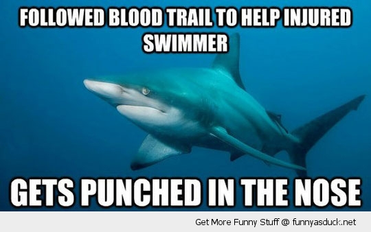 misunderstood shark meme blood nose animal funny pics pictures pic picture image photo images photos lol