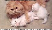 cat lolcat kittens mom animal marshmallows funny pics pictures pic picture image photo images photos lol