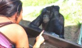thinking about monkey chimp bananas animal funny pics pictures pic picture image photo images photos lol