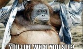 yeah baby monkey orangutan animal funny pics pictures pic picture image photo images photos lol