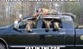 moose in car no time animal funny pics pictures pic picture image photo images photos lol