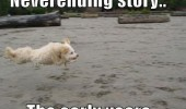 never ending story flying dog animal funny pics pictures pic picture image photo images photos lol