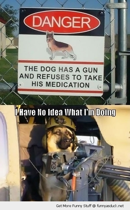gun dog animal no idea helmet funny pics pictures pic picture image photo images photos lol