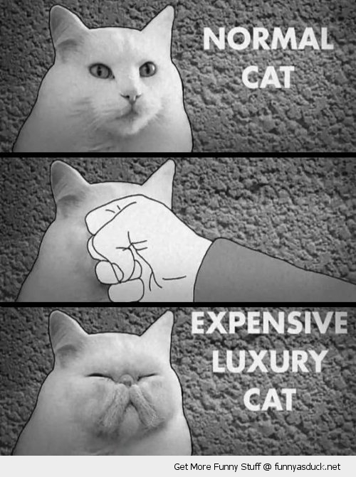 normal vs luxury cat lolcat animal punch face funny pics pictures pic picture image photo images photos lol