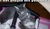 not playing anymore grumpy cat lolcat animal funny pics pictures pic picture image photo images photos lol
