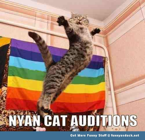 nyan cat auditions lolcat animal funny pics pictures pic picture image photo images photos lol