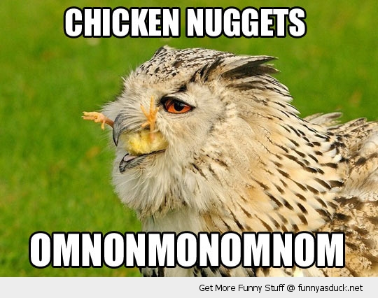 chicken nuggets om nom hawk bird eating funny pics pictures pic picture image photo images photos lol