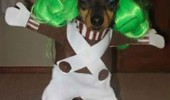 oompa loompa dog costume present shoe animal funny pics pictures pic picture image photo images photos lol