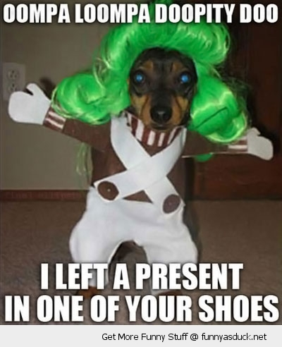 Oompa Loompa Dog Costume Present Shoe Animal Funny Pics Pictures Pic