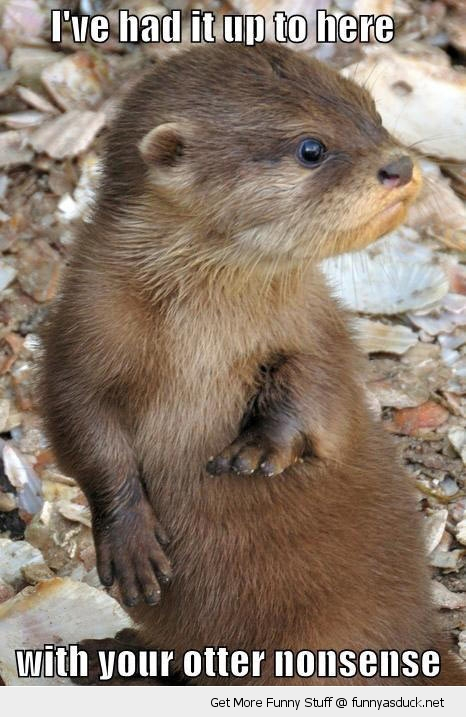 otter nonsense animal tired angry funny pics pictures pic picture image photo images photos lol