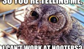 owl bird hooters telling me animal funny pics pictures pic picture image photo images photos lol