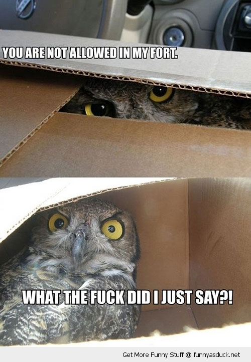 owl box fort cardboard bird animal funny pics pictures pic picture image photo images photos lol
