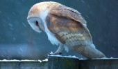 owl by myself bird animal funny pics pictures pic picture image photo images photos lol
