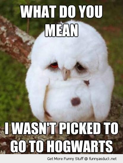 harry potter hogwarts owl wasn't picked animal funny pics pictures pic picture image photo images photos lol