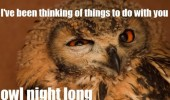 owl night long pun bird animal funny pics pictures pic picture image photo images photos lol