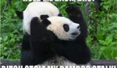animal panda bamboo hold me back funny pics pictures pic picture image photo images photos lol