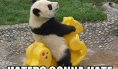 panda haters rocker animal funny pics pictures pic picture image photo images photos lol